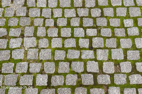 moos steinen entfernen moos auf gehwegen entfernen bl 252 tenrausch