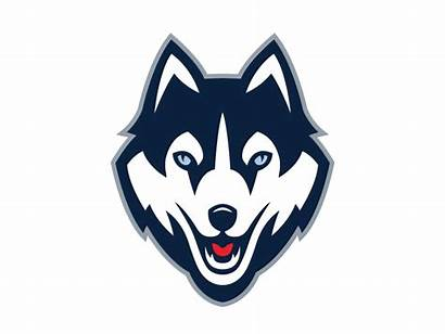 Husky Uconn Huskies Animated Dog Wolf Animation