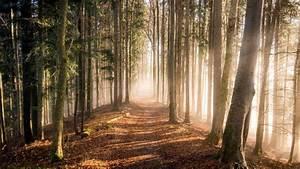 Bilder Vom Wald : diese fakten ber den wald werden sie berraschen ~ Yasmunasinghe.com Haus und Dekorationen