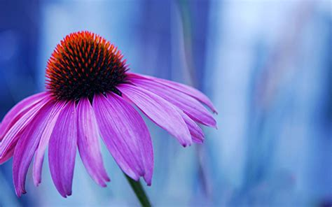 Wallpaper Of Hd Flower by Macro Flowers Wallpaper A6 Hd Desktop Wallpapers 4k Hd
