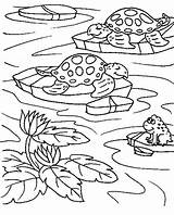 Pond Coloring Pages Turtle Frog Sea Ponds Pixel Printable Sheet Sheets Colornimbus Turtles Template Frogs Print Preschool Forest Deciduous Description sketch template