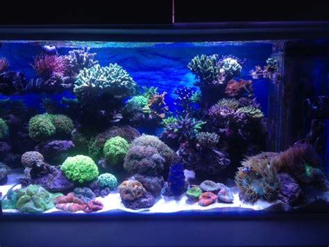aquarium eau de mer fish only recifal reef tank 600l sps lps de alexpilon pr 233 sentation de vos bacs picos et nanos