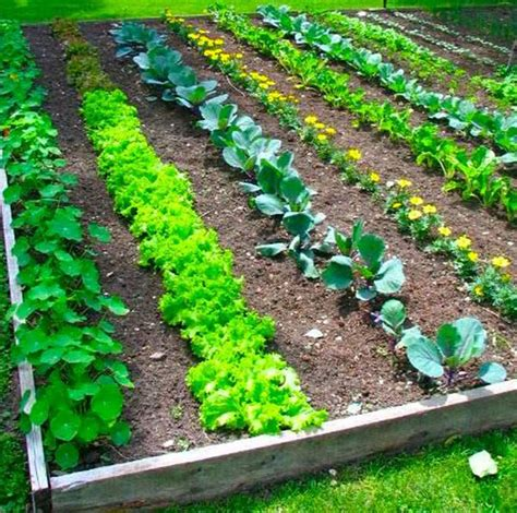 Kitchen Garden Hacks by 17 Clever Vegetable Garden Hacks