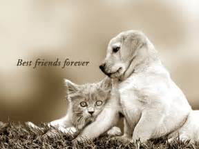 best dogs for cats best friends forever