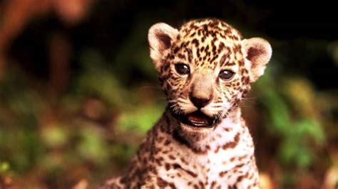 Baby Animals Slideshow