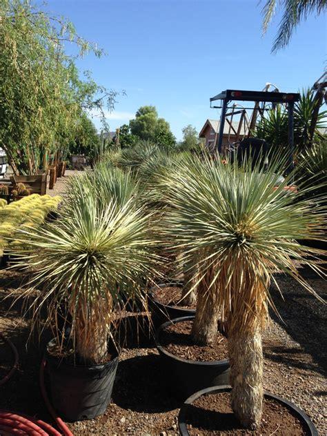 xeriscape trees xeriscape plants earthtones landscape management