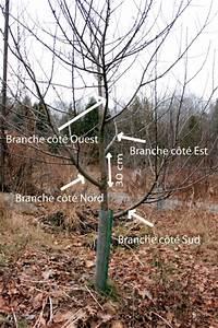 Quand Planter Un Pommier : arbres fruitiers comment tailler un arbre fruitier ~ Dallasstarsshop.com Idées de Décoration