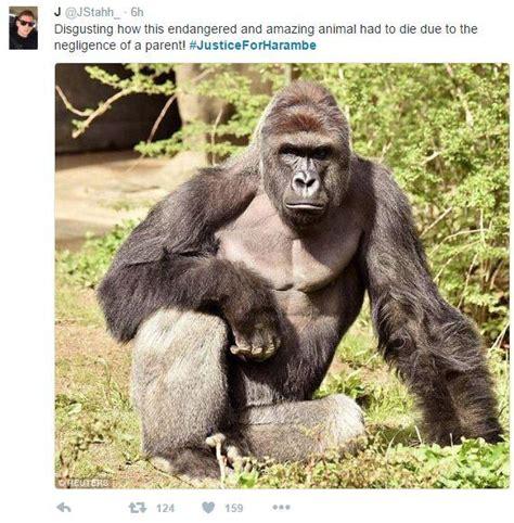 Funny Harambe Memes - harambe the gorilla know your meme