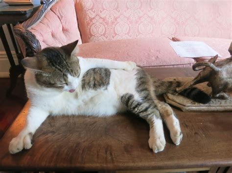 The Living Room Or Not Cat by Ernest Hemingway House Edelson Luxury Travel