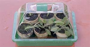 Magnolien Vermehren Durch Stecklinge : kr uter durch stecklinge vermehren mein sch ner garten ~ Lizthompson.info Haus und Dekorationen