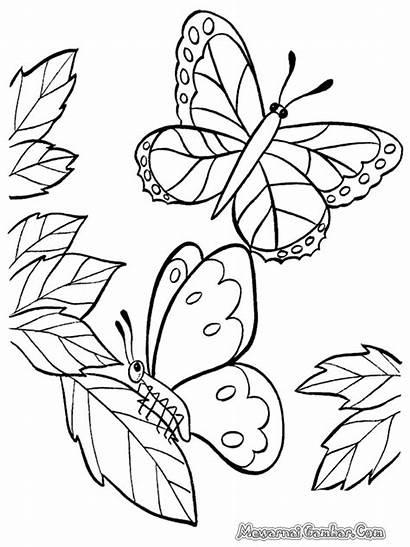Mewarnai Gambar Kupu Bunga Untuk Sketsa Dan