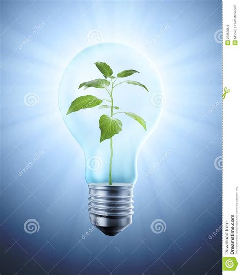 plant inside a bulb stock images image 23258064