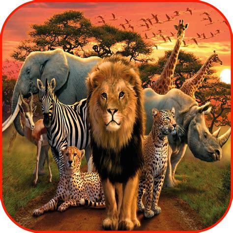Safari Animal Wallpaper - best 49 safari wallpaper on hipwallpaper safari