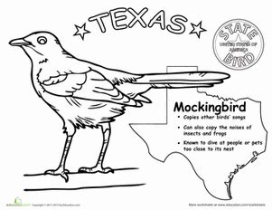 texas state bird worksheet education