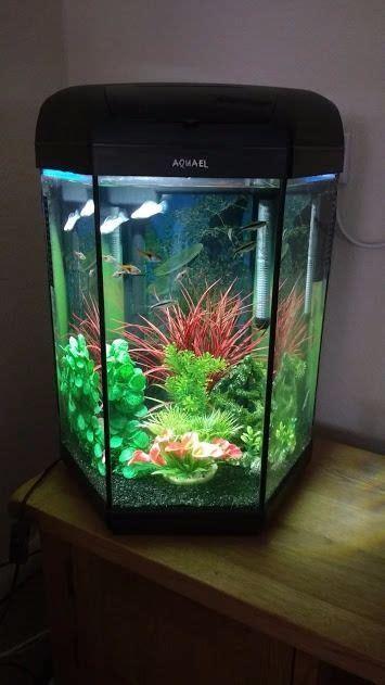aquael hexagon 60 litre tropical aquarium in goole east gumtree