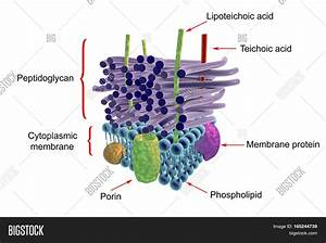 Structure Cell Wall Image  U0026 Photo  Free Trial