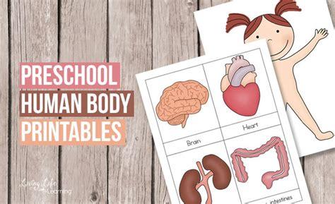 preschool human printables 818 | preschool human body printables fb