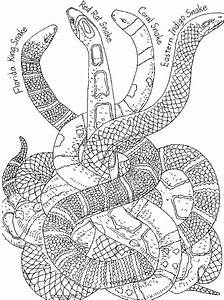 Chinese New Year Snake Coloring Pages - family holiday net