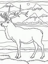 Coloring Elk Rocky Mountains Mountain Deer Printable Drawings Drawing Coloringhome Natale Adult Wapiti Regard Running Sheets Popular Designlooter sketch template
