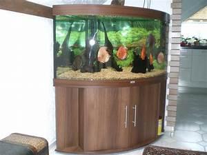 Juwel Trigon 350 : juwel aquarium trigon 350 eck nu braun mit wertvollen diskus fischen in recklinghausen tiere ~ Frokenaadalensverden.com Haus und Dekorationen
