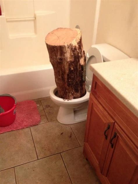 someone literally left a log in the toilet collegehumor post