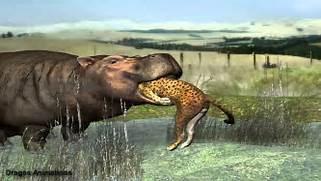 hippo eat leopard - YouTube  Hippopotamus Eating People