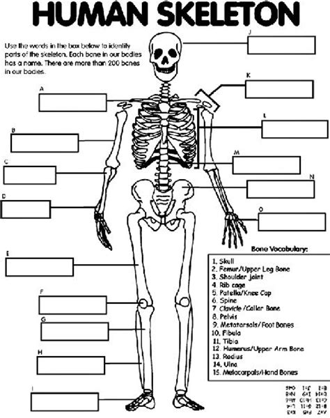 human skeleton coloring page human body unit human body