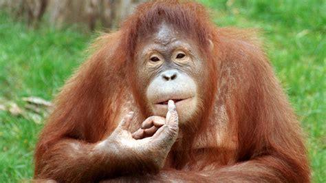 die kleine anfrage tierische nagelpflege leonardo