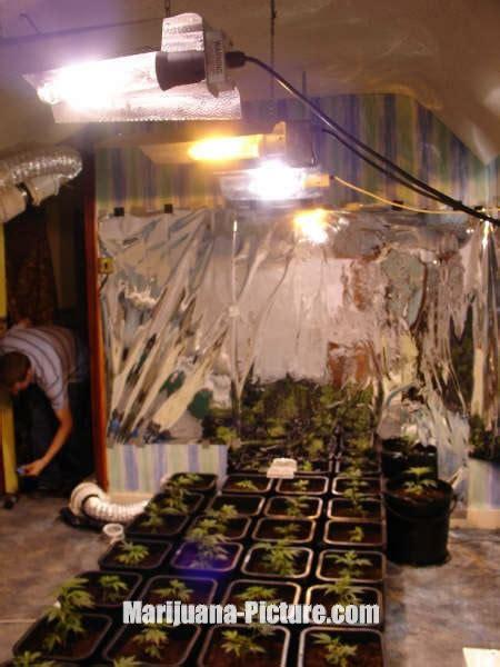 lights for seedlings pictures of marijuana seedlings seedlings under light jpg