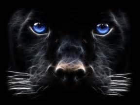 black panther cat black panther big cat digital hd wallpaper hd wallpaper