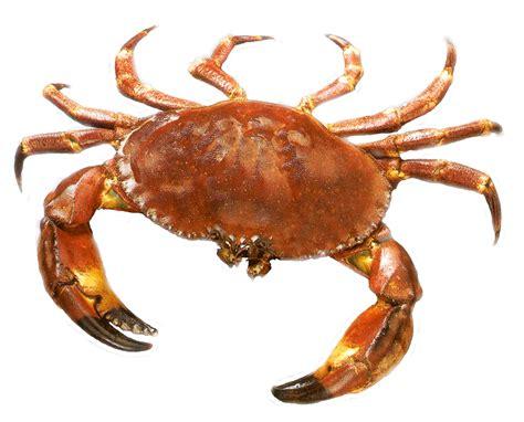 crab dishes  chennai chennai foody