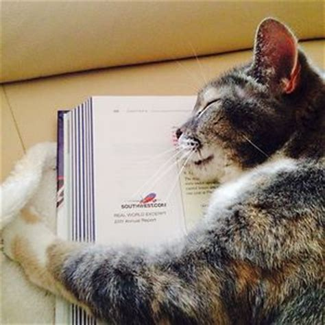 gatos   nos dejan leer  exigen tu atencion
