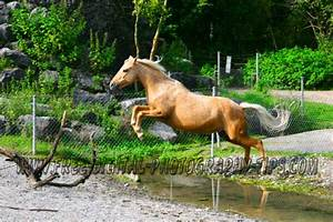 horses jumping | ... Beautiful palomino horse jumping a ...