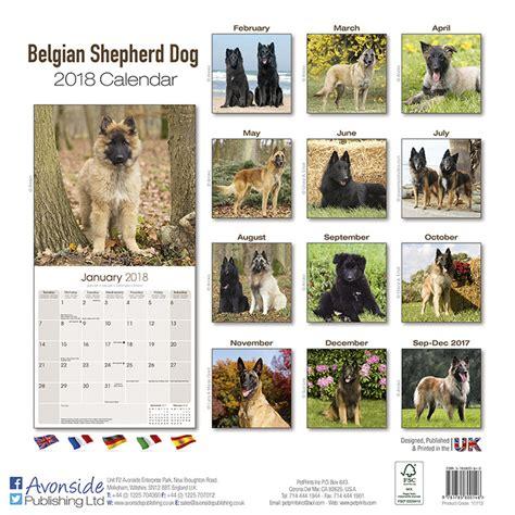 belgian shepherd dog calendars ukpostersukposters