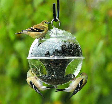 how to attract and feed wild birds in your home backyard