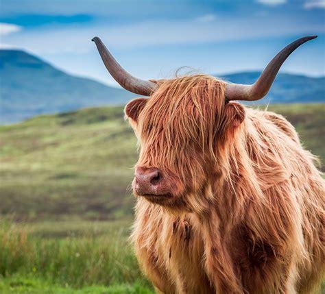 Typisch Für Schottland by Reisetipps F 252 R Schottland Die Gr 252 Ne Seele