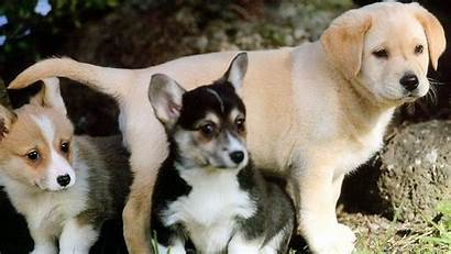 Dog Puppies Wallpapers Animals Walls Hdnicewallpapers
