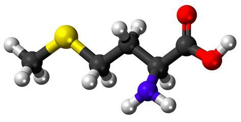 Does L-methionine Have Health Benefits? A Scientist Explains