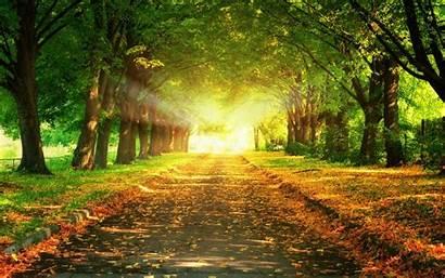 Autumn Wallpapers Desktop Nature Leaves Sunlight Tags
