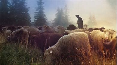 Image result for feed my sheep