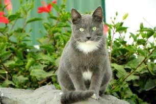 grey cats grey cats catnip