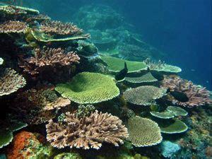 coral types    recognize  similan islands corals