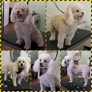 happy paws dog grooming monrovia