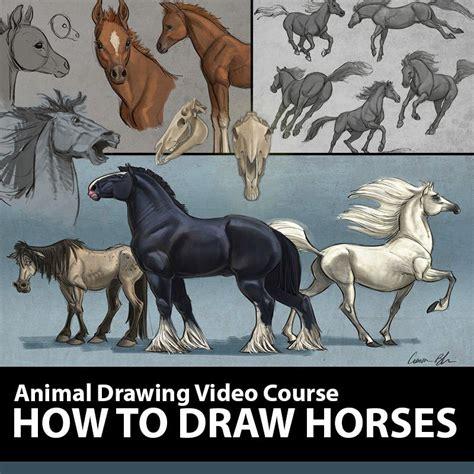 aaron blaise explains  essentials  animal drawing