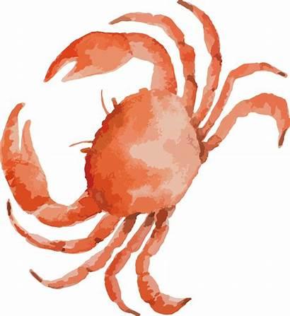 Crab Seafood Clipart Drawing Leg Clip Watercolor