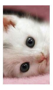 Cute Cats Wallpaper HD #10511 Wallpaper | WallDiskPaper