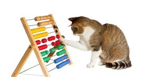 katzenspielzeug spielspass mit spielzeug fuer katzen