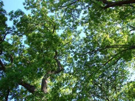 tool  pollution  ancient tree canopies
