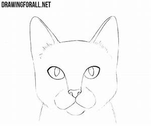 How, To, Draw, A, Cat, Head