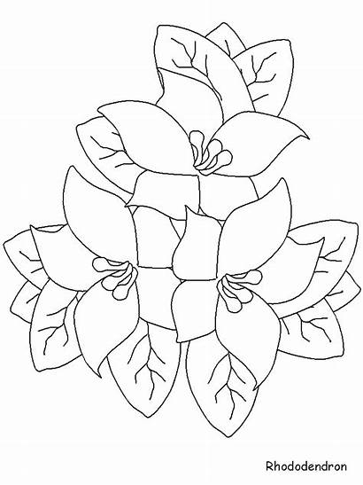 Coloring Flower Purple Flowers Colouring Designlooter
